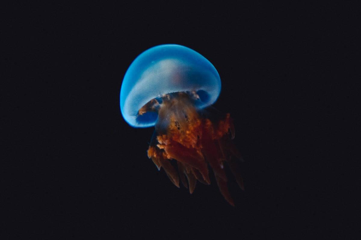 Osaka-Aquarium-Jellyfish